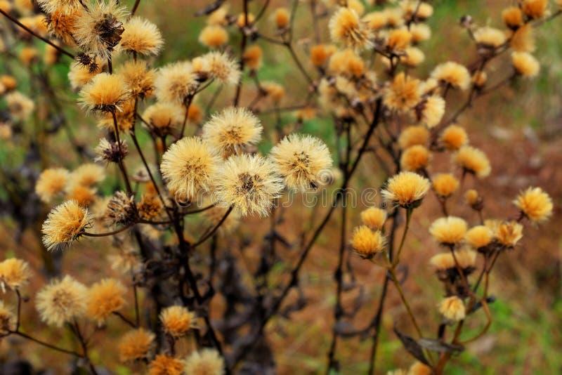 Последние цветки луга падения стоковое фото