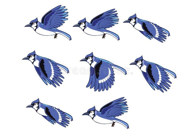 Последовательность летания птицы голубого Джэй иллюстрация вектора