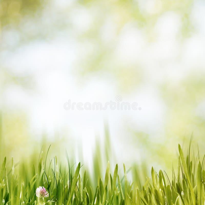 Download После полудня лета красоты стоковое изображение. изображение насчитывающей environment - 40591435