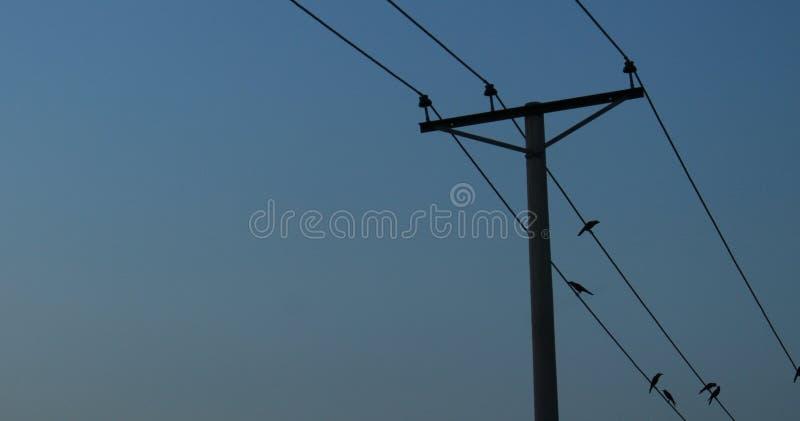 после полудня романс электричества проводов птиц стоковое изображение rf
