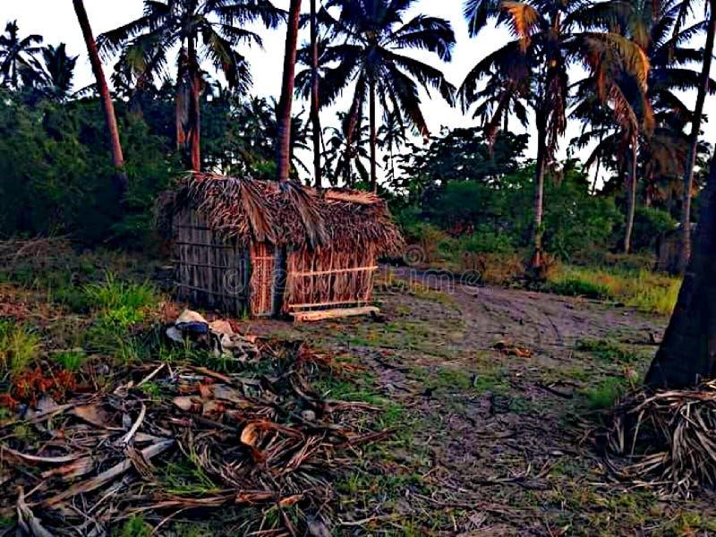 потерянные древесины стоковая фотография