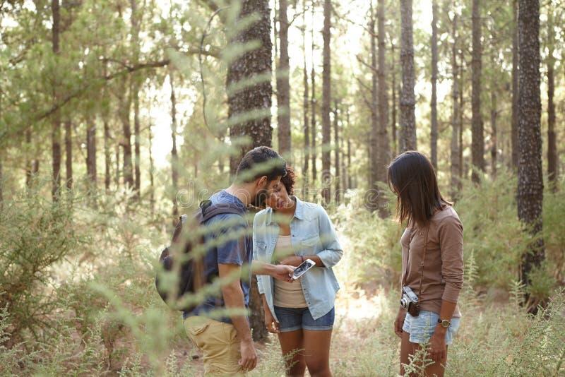 Потерянные друзья в сосновом лесе стоковое фото rf