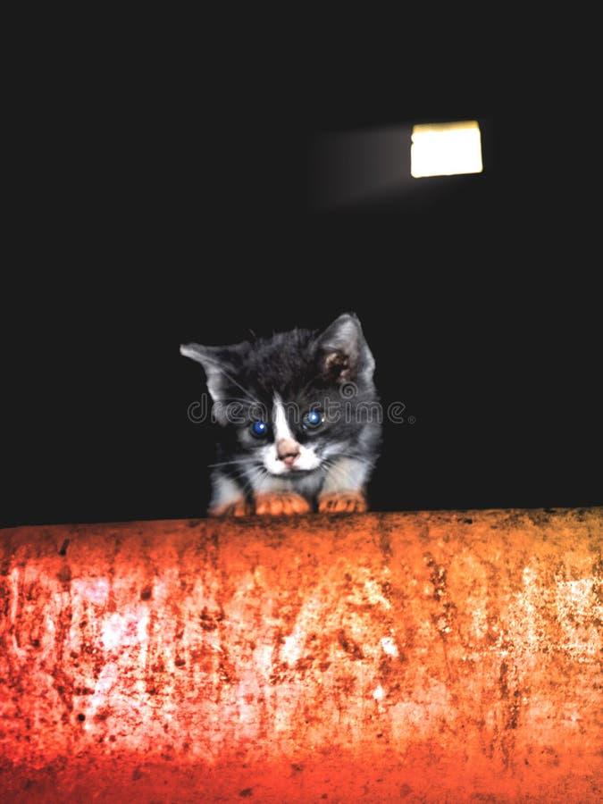 Потерянный котенок в ужасном месте, предпосылка на хеллоуин стоковое изображение