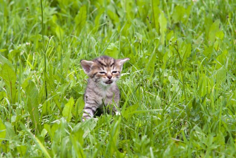 потерянный котенок стоковое изображение rf