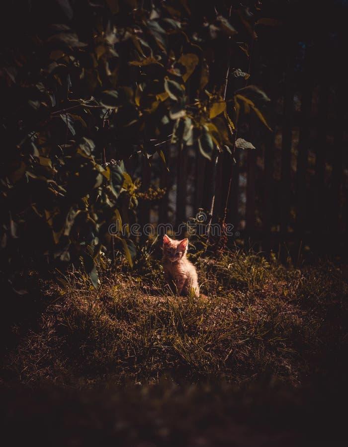 потерянный котенок стоковое изображение