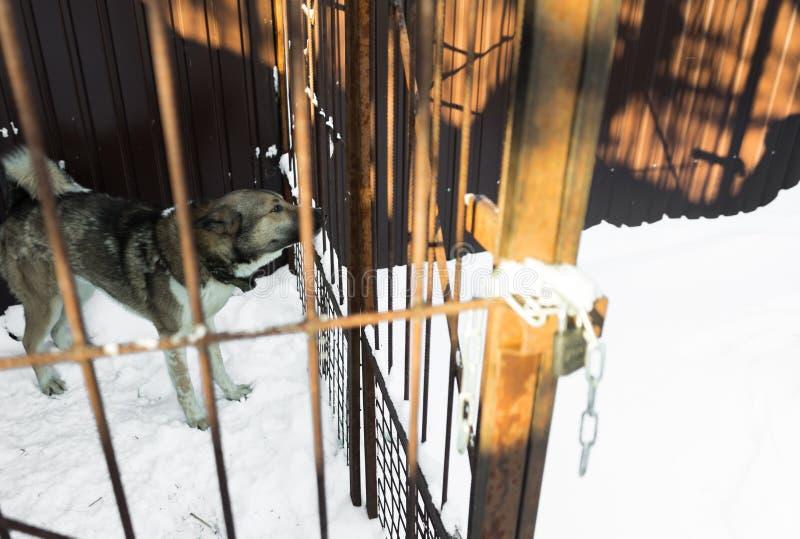Потерянный любимчик, унылая собака в тюремной камере Концепция гуманного подхода живых существ стоковая фотография rf