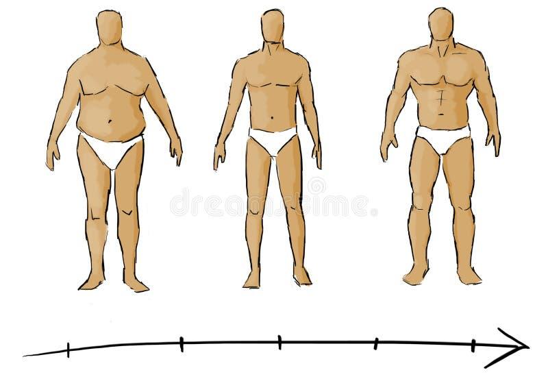 Download Потеря веса иллюстрация штока. иллюстрации насчитывающей силуэт - 33725464