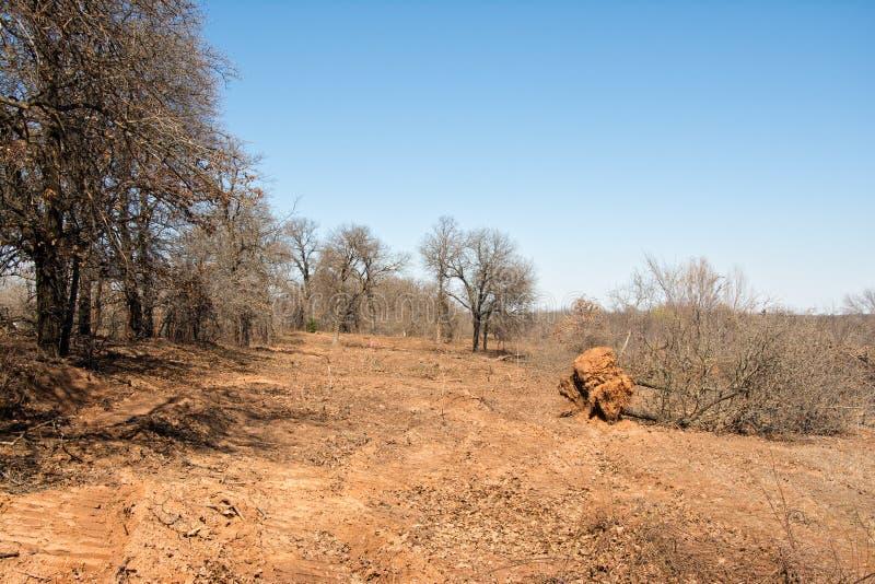 Потеря среды обитания живой природы после освобождать вне деревья с бульдозером стоковые фотографии rf