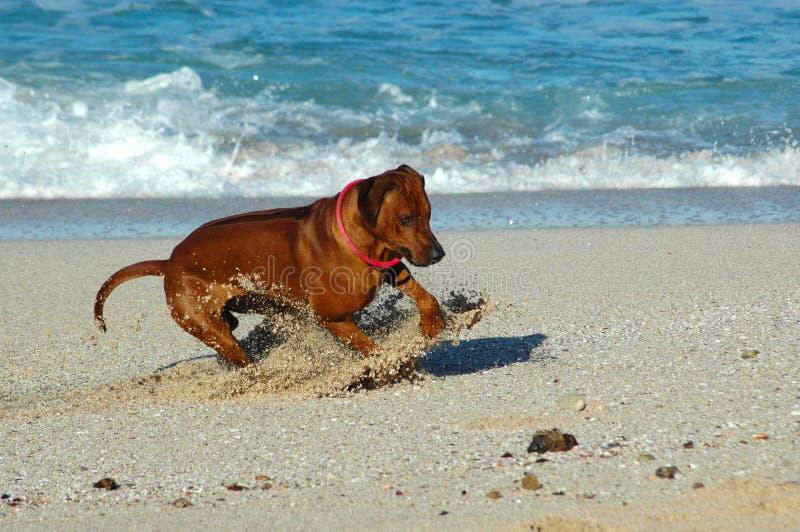 потеха пляжа стоковое фото