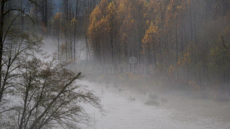 Потоки реки Skokomish от проливного дождя стоковое фото