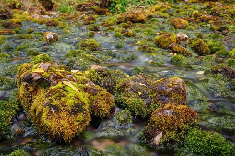Поток бежать между камнями и мхом стоковые изображения