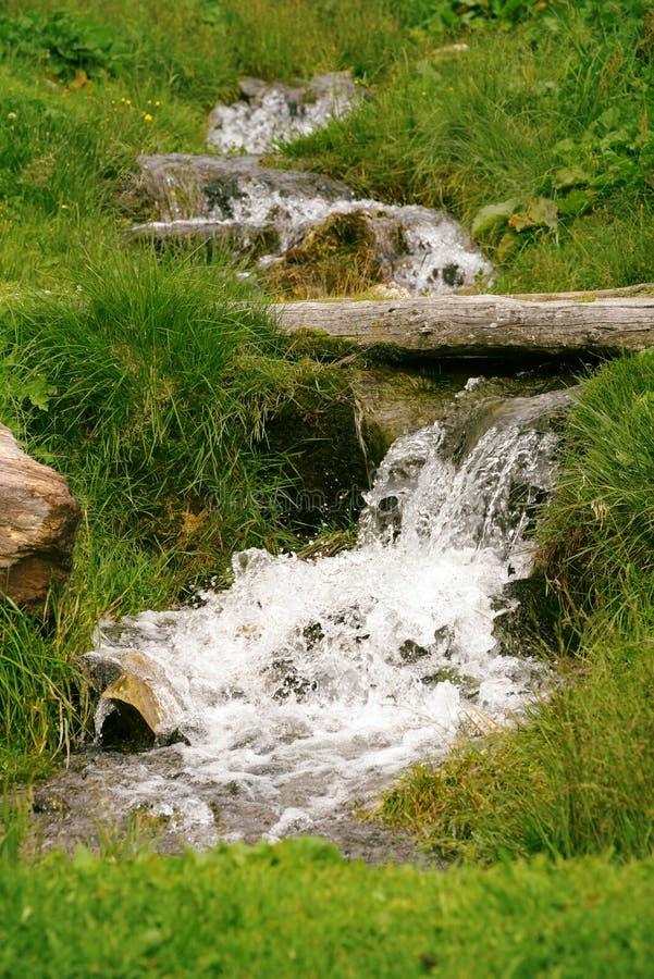 Поток воды в глуши стоковое фото