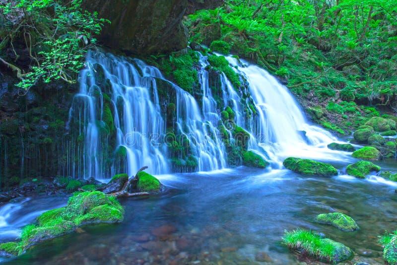 Поток в зеленом лесе стоковые изображения
