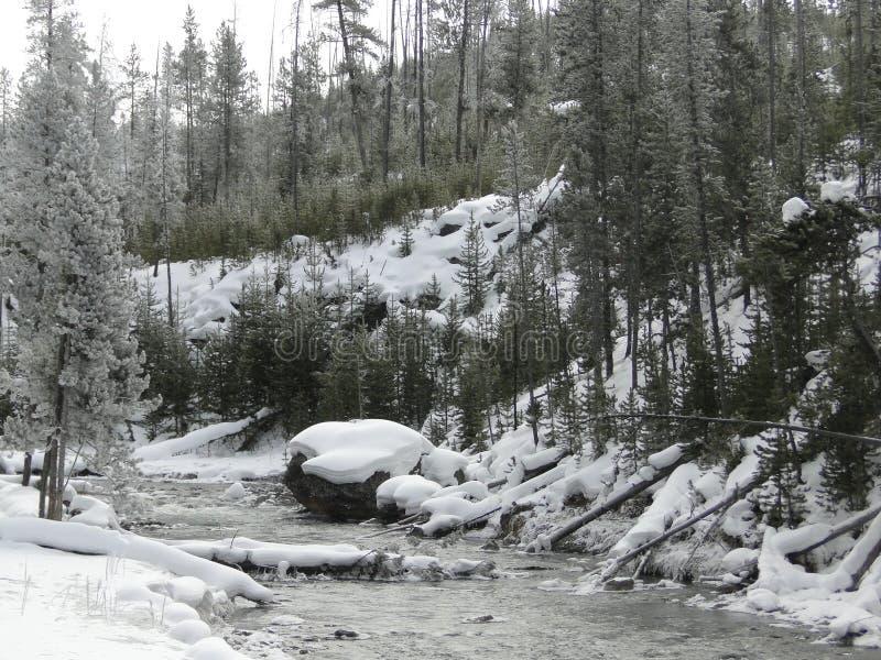 Поток в Йеллоустоне NP стоковая фотография rf