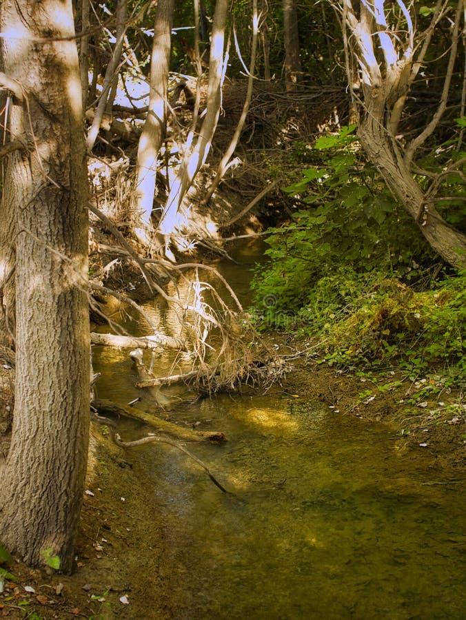 Поток в лесу стоковая фотография
