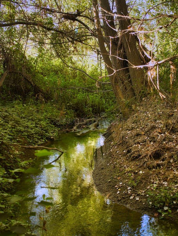 Поток в лесу стоковые изображения