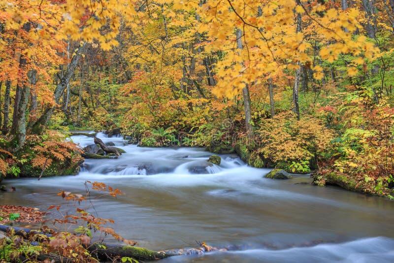 Поток в осени - Towada Oirase, Aomori, Япония стоковые изображения rf
