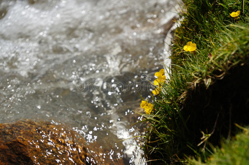 Поток в Ladakh, северной Индии стоковые изображения rf