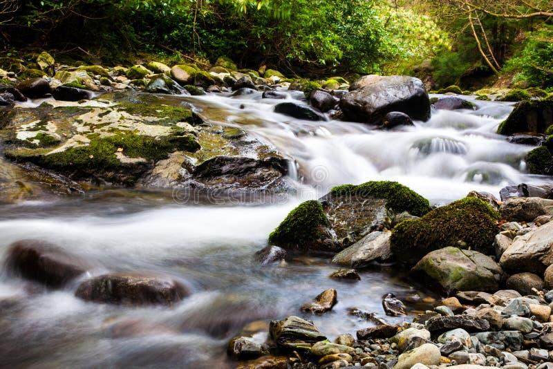 Поток в Tollymore Forest Park стоковое изображение rf