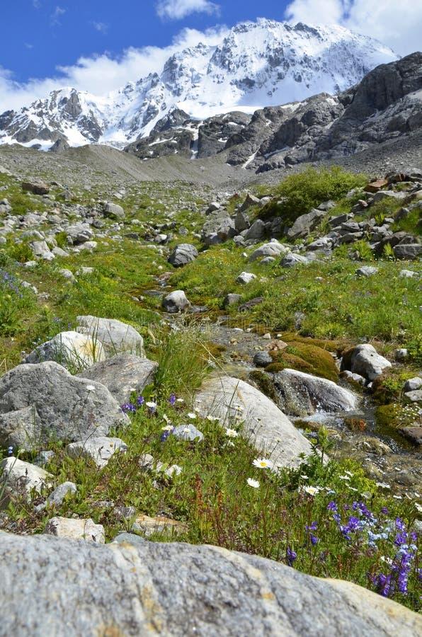 Поток горы в высокогорном луге стоковые изображения