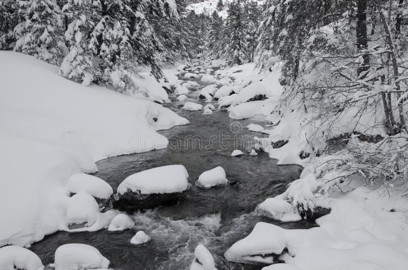 Поток горы в лесе зимы стоковое изображение rf