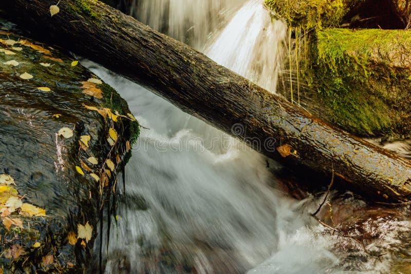 Поток горы в лесе стоковая фотография rf