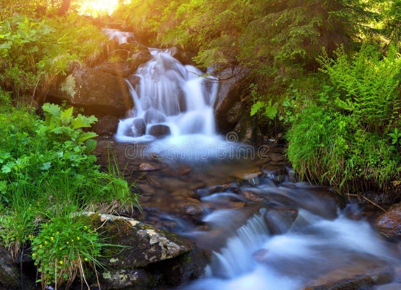 Поток горы в woodsat лета на восходе солнца стоковые изображения rf