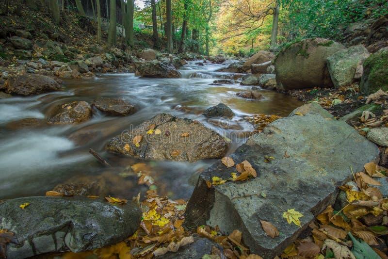 Поток горы с водопадом стоковые фото