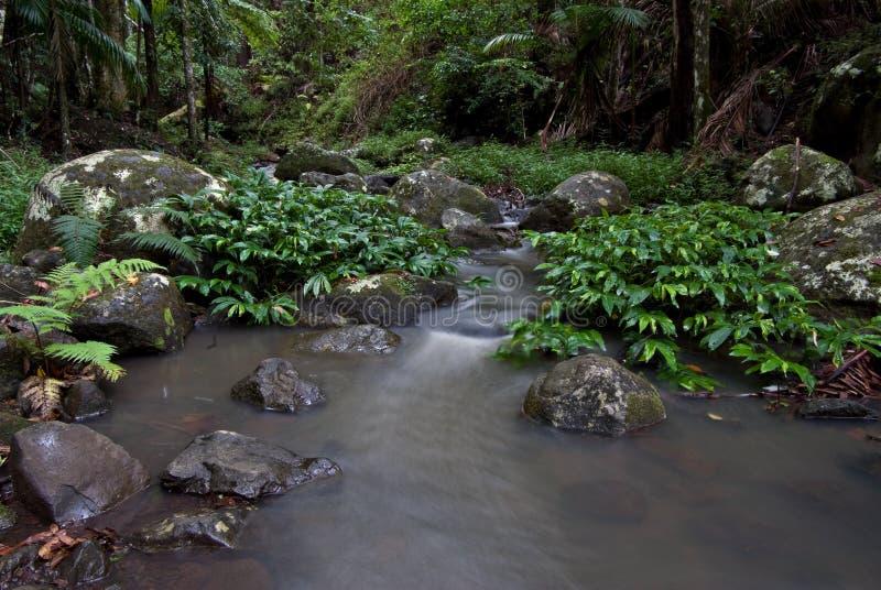 поток дождевого леса стоковые фотографии rf