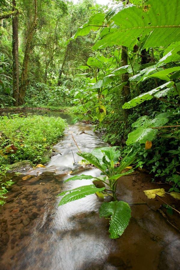 поток дождя пущи стоковое фото rf