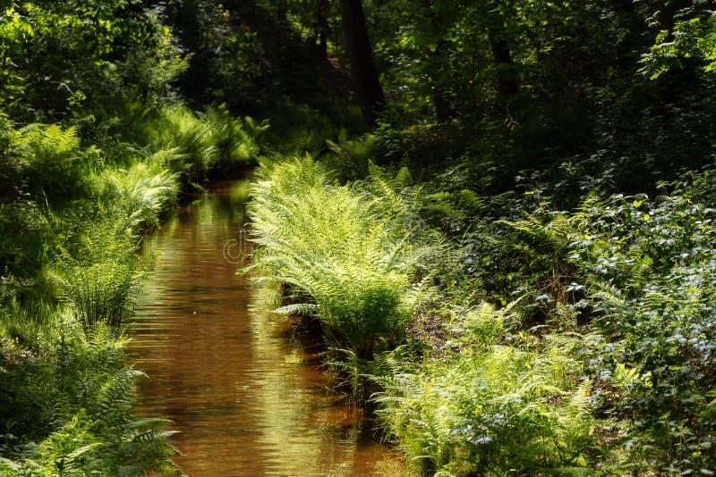 Поток леса весной стоковое фото