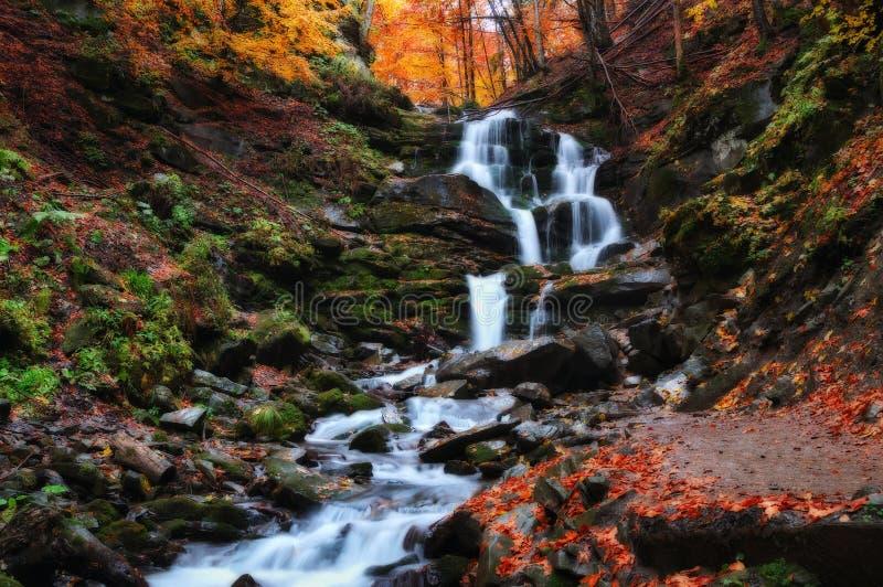 Поток живописный водопад в прикарпатских горах стоковые фотографии rf