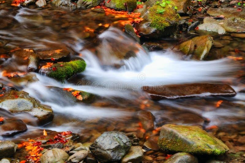 Поток живописный водопад в прикарпатских горах стоковые изображения