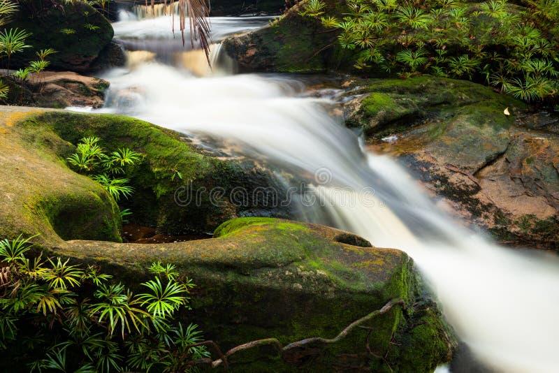 поток джунглей малый стоковая фотография rf