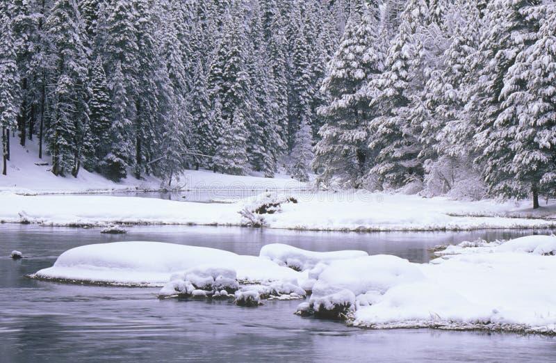 Поток и сосны в снеге, Лаке Таюое, Калифорнии стоковые изображения