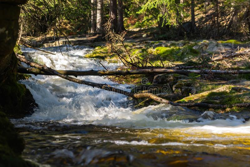 Поток и эвкалипты скалистой горы в предпосылке стоковые изображения rf