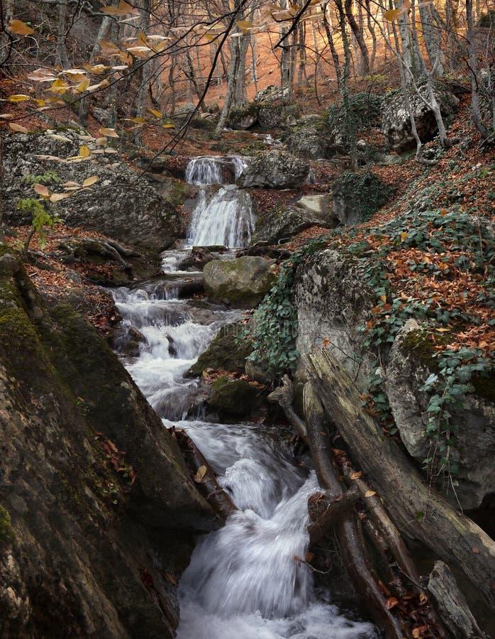 Поток между камнями в лесе осени стоковая фотография