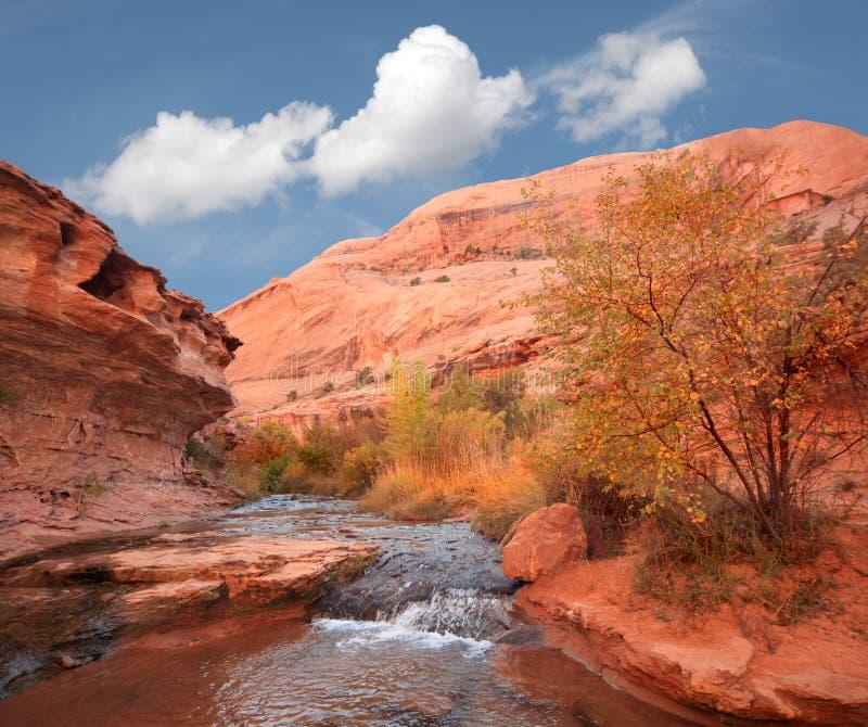 поток национального парка пустыни сводов стоковая фотография rf