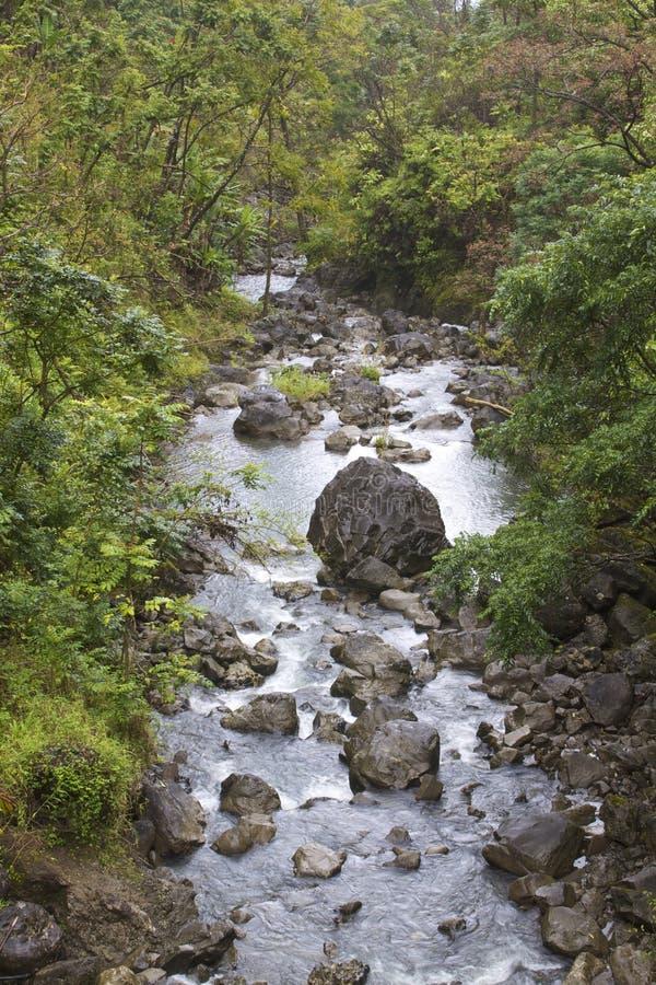 поток тропический стоковые фотографии rf