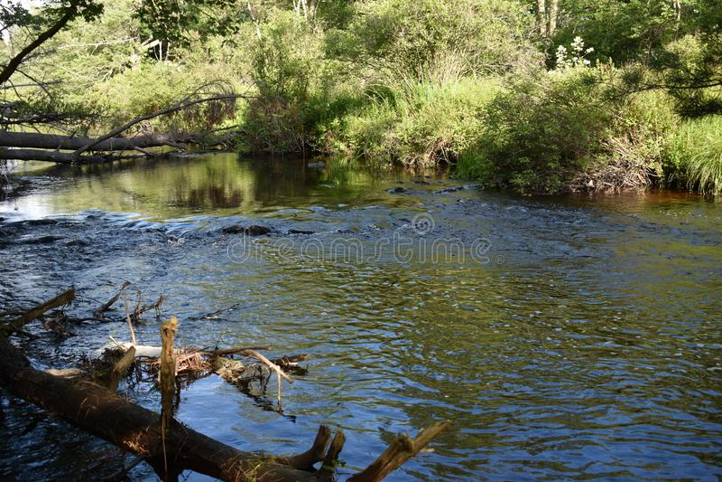 Поток форели в Poconos
