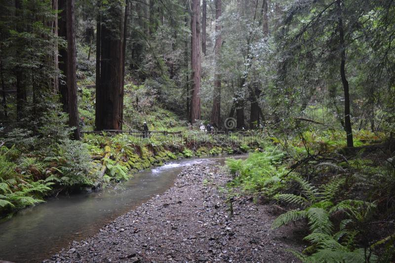 Поток через лес стоковое фото rf
