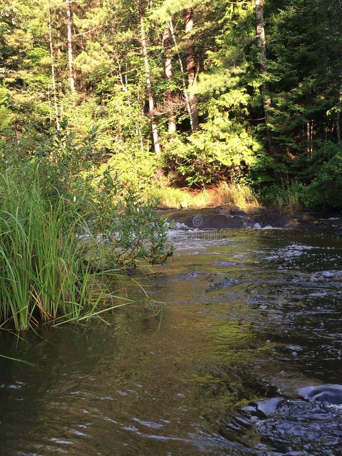 Поток через северный лес Висконсина стоковое фото