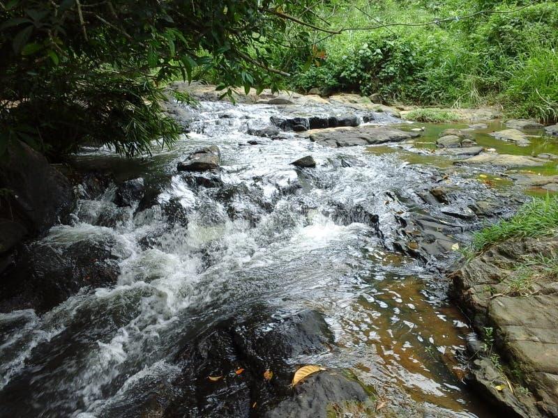 Поток, Шри-Ланка стоковая фотография rf