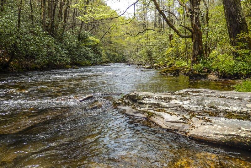Поток Asheville Северная Каролина рыбной ловли стоковое фото