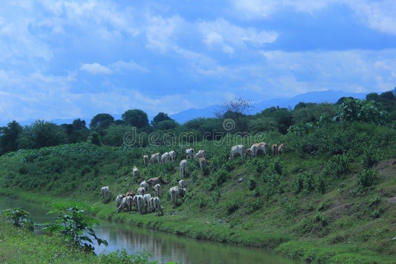 Поток Gumbasa на регентстве SIGI, Индонезии стоковые фотографии rf