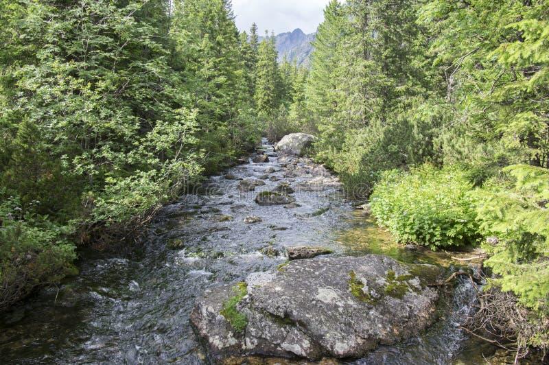 Поток Krupa в горах Tatra, Словакия горы стоковые фотографии rf