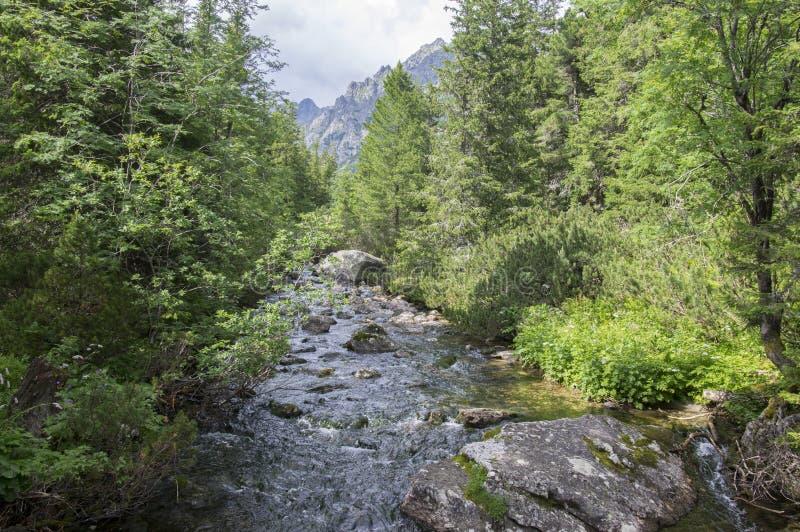 Поток Krupa в горах Tatra, Словакия горы стоковое фото rf