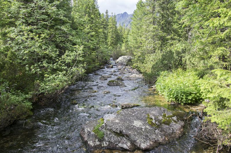 Поток Krupa в горах Tatra, Словакия горы стоковые фото