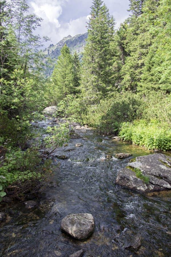 Поток Krupa в горах Tatra, Словакия горы стоковое изображение