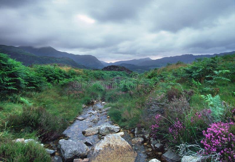 Поток Muontain в Уэльсе стоковое изображение rf